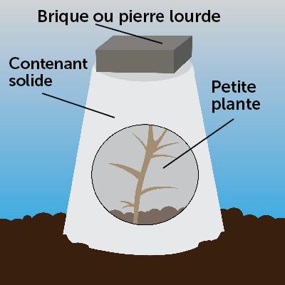 Petite plante ou buisson sous un contenant solide recouvert d'une brique ou d'une pierre lourde