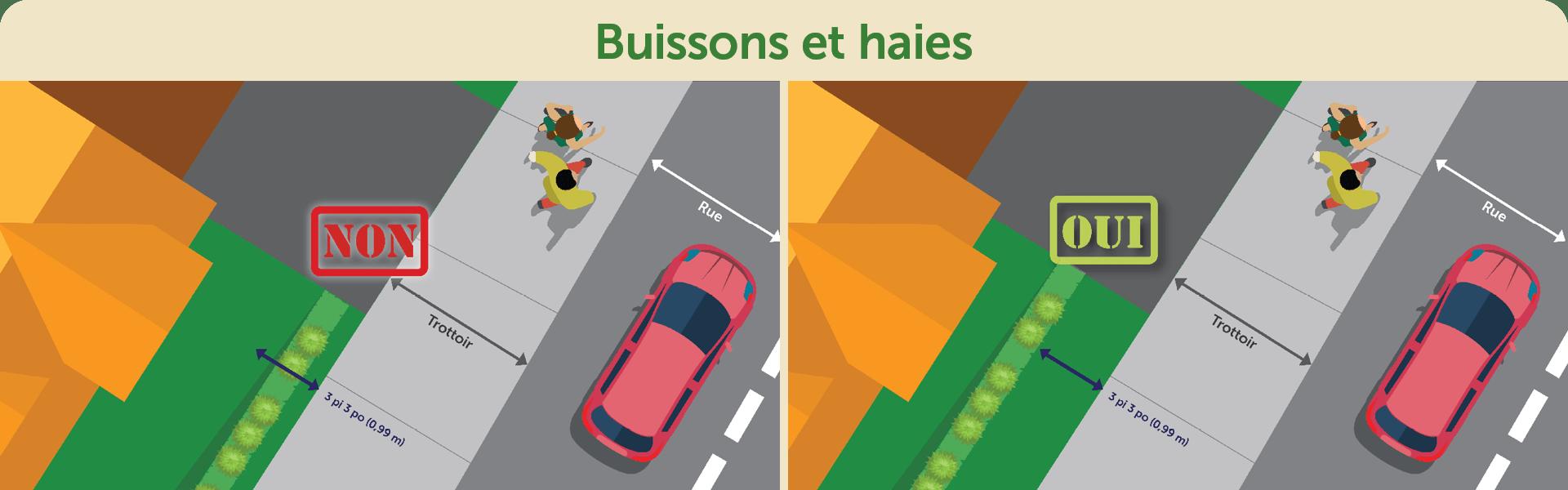 Buissons et haies