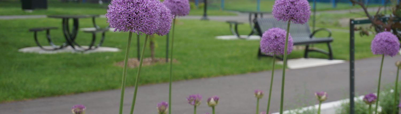 Trudeau Park flowers