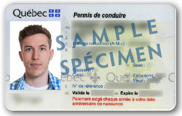 Driver's licence sample