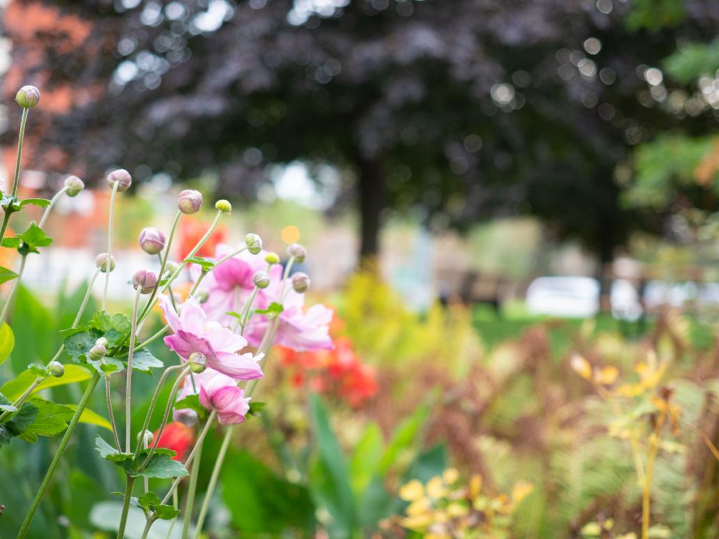 Flower bed at Prud'homme park